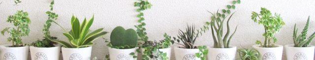 木下鍼灸院、ガン、パーキンソン病、脳梗塞、京都市内中心、往診専門